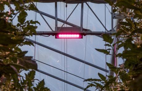 Hortipower Oreon led hybride belichting tuinbouw
