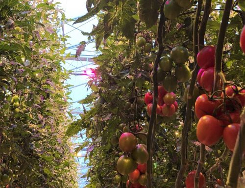 Hybrid lighting for better production at Hortipower