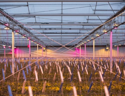 Hybrid lighting for better production at Hortipower