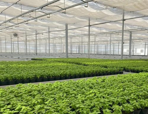 Project Simply Fresh India succesvol afgerond