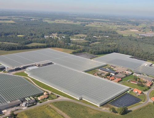 Tomato grower Tomeco switches to hybrid lighting system